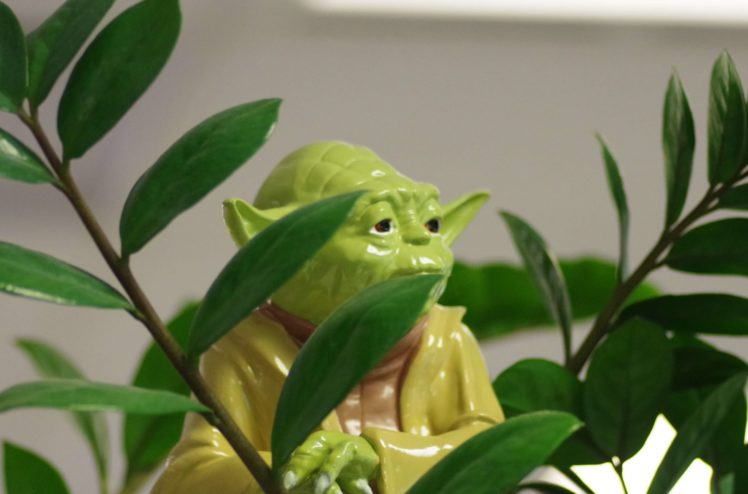 Image of Star Wars' Yoda